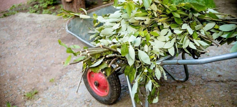 Odbioru bioodpadów pochodzących z pielęgnacji terenów zielonych
